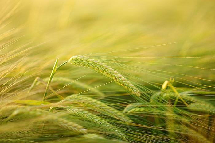 Молитвы для земледельцев
